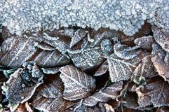与冻叶子的冬天背景 免版税库存照片