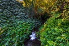 与绿叶的小瀑布 库存图片