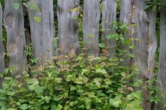 与绿叶的木背景 免版税库存照片