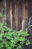 与绿叶的木背景 免版税图库摄影