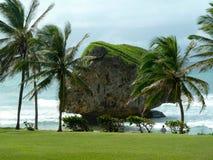 与绿叶的被腐蚀的岩石在海岸 图库摄影