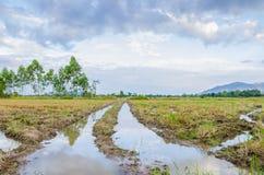与水和天空的干燥稻田 库存图片