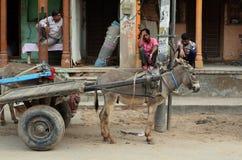 与驴和推车, Nawalgarh,王侯的街道生活 图库摄影