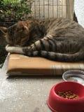 与水和食物的猫 免版税库存图片