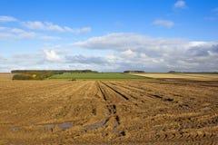 与水坑的被收获的土豆领域 免版税库存照片