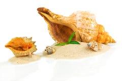 与贝壳和竹子的温泉概念 免版税库存照片