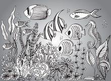 与贝壳的传染媒介单色手拉的例证 图库摄影