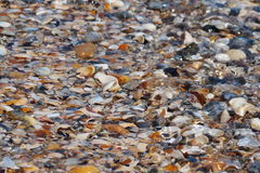 与贝壳的海岸 免版税图库摄影