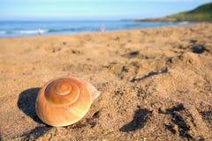 与贝壳的美丽的海滩在沙子、蓝色波浪和天空 免版税库存图片