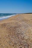 与贝壳的美丽的海滩 免版税图库摄影