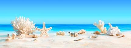 与贝壳的风景在热带海滩 免版税库存图片