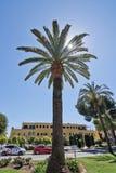 与满天星斗的太阳的棕榈树 免版税图库摄影