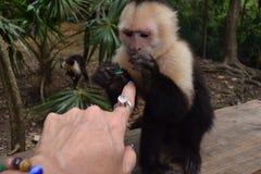 与猴子的乐趣!!!猴子喜悦!!! 免版税库存照片