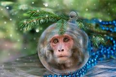 与猴子的圣诞节球 免版税库存照片