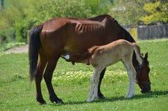 与婴孩的一匹马 免版税库存图片