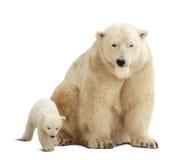 与婴孩的北极熊在白色 图库摄影