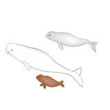与婴孩的北极白鲸白海豚鲸鱼 蓝色云彩图象彩虹天空向量 向量例证