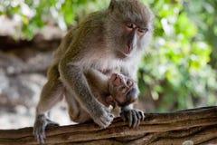 与婴孩的成人猴子 库存图片