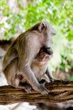 与婴孩的成人猴子 图库摄影