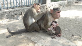 与婴孩的猴子 免版税库存图片
