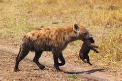 与婴孩-徒步旅行队肯尼亚的鬣狗 免版税库存照片