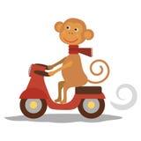 与围巾的逗人喜爱的猴子在运输 库存照片