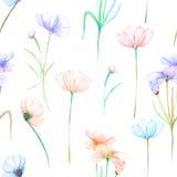 与水彩手拉的嫩桃红色和紫色波斯菊的一个无缝的花卉样式开花 库存图片