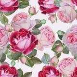 与水彩桃红色和紫色玫瑰的花卉无缝的样式 免版税库存图片