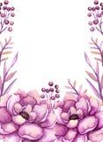 与水彩桃红色牡丹和莓果的框架 免版税图库摄影