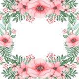 与水彩桃红色鸦片和绿色蕨的框架 库存照片