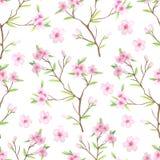 与水彩樱花的无缝的样式 库存例证
