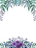 与水彩深紫罗兰色花和莓果的框架 免版税库存图片