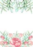 与水彩玫瑰、蕨和叶子的框架 库存照片