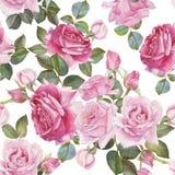 与水彩玫瑰的花卉无缝的样式 免版税库存照片