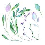 与水彩的花卉元素油漆 免版税库存照片
