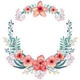 与水彩红色热带花的花圈,莓果和绿色叶子 免版税库存图片