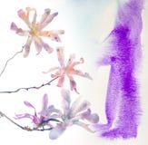 与水彩纹理的桃红色木兰花 库存图片