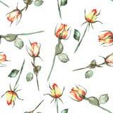 与水彩美丽的红色和黄色玫瑰的一个无缝的样式在白色背景 图库摄影