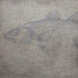与水彩鱼概述的织地不很细老纸背景 免版税图库摄影