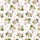 与水彩画的无缝的花卉模板绘了苹果和樱桃在白色背景隔绝的花开花 免版税图库摄影