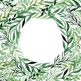 与水彩绿色叶子和草本的方形的框架 免版税库存照片