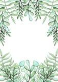 与水彩绿色蕨和草本的框架 库存照片