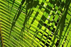 与阴影的棕榈叶背景 免版税库存图片