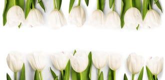 与阴影的白色郁金香 免版税库存照片