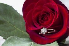 与钻戒的大红色玫瑰在瓣黏附了 库存照片
