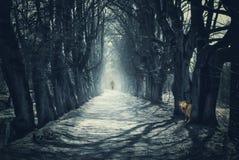 与黑暗的森林的万圣夜神秘的背景 免版税库存照片