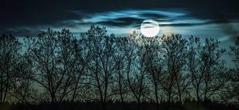 与满月和树的蓝色风景 免版税库存照片
