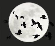 与满月的飞行乌鸦 免版税库存照片