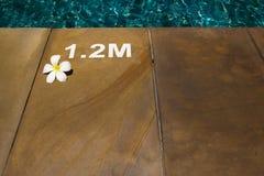 与晴朗的反映的游泳池 免版税图库摄影