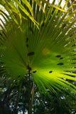 与晴朗的棕榈叶的热带背景 库存照片
